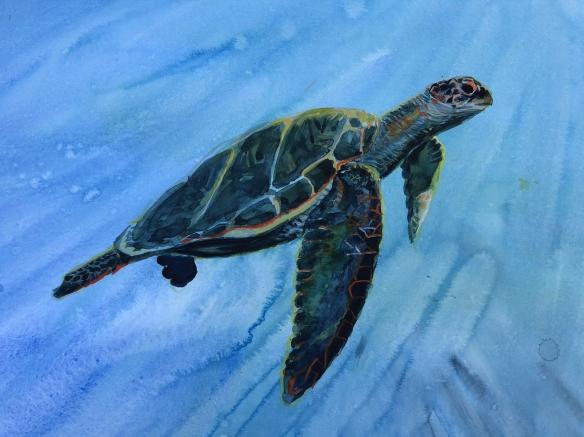 sea-turtle-1.jpg